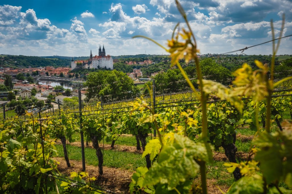 View of Meissen castle on Elbe river, Saxony, Germany. Vineyards on sunny day